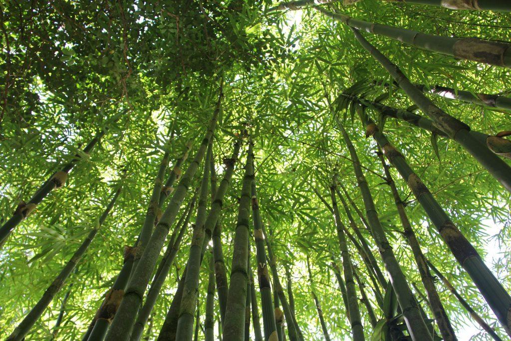 photo d'une forêt de vue d'en dessous